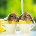 -ارانب-2019-معلومات-كاملة-عن-الأرانب-صور-ميكس-2-1-150x150 صور ارانب 2019 معلومات كاملة عن الأرانب