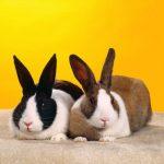 -ارانب-2019-معلومات-كاملة-عن-الأرانب-صور-ميكس-2-150x150 صور ارانب 2019 معلومات كاملة عن الأرانب