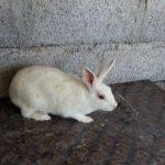 -ارانب-2019-معلومات-كاملة-عن-الأرانب-صور-ميكس-21-150x150 صور ارانب 2019 معلومات كاملة عن الأرانب