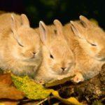 -ارانب-2019-معلومات-كاملة-عن-الأرانب-صور-ميكس-22-150x150 صور ارانب 2019 معلومات كاملة عن الأرانب