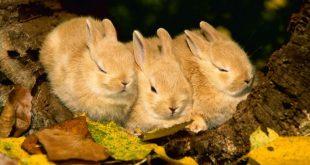 ارانب 2019 معلومات كاملة عن الأرانب صور ميكس 22