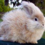 -ارانب-2019-معلومات-كاملة-عن-الأرانب-صور-ميكس-23-150x150 صور ارانب 2019 معلومات كاملة عن الأرانب