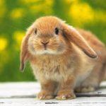 -ارانب-2019-معلومات-كاملة-عن-الأرانب-صور-ميكس-24-150x150 صور ارانب 2019 معلومات كاملة عن الأرانب