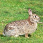 -ارانب-2019-معلومات-كاملة-عن-الأرانب-صور-ميكس-25-150x150 صور ارانب 2019 معلومات كاملة عن الأرانب