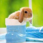 -ارانب-2019-معلومات-كاملة-عن-الأرانب-صور-ميكس-27-150x150 صور ارانب 2019 معلومات كاملة عن الأرانب