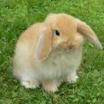 -ارانب-2019-معلومات-كاملة-عن-الأرانب-صور-ميكس-3-150x150 صور ارانب 2019 معلومات كاملة عن الأرانب