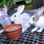 -ارانب-2019-معلومات-كاملة-عن-الأرانب-صور-ميكس-30-150x150 صور ارانب 2019 معلومات كاملة عن الأرانب
