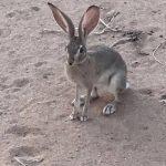 -ارانب-2019-معلومات-كاملة-عن-الأرانب-صور-ميكس-31-150x150 صور ارانب 2019 معلومات كاملة عن الأرانب