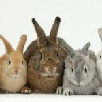 -ارانب-2019-معلومات-كاملة-عن-الأرانب-صور-ميكس-33-150x150 صور ارانب 2019 معلومات كاملة عن الأرانب