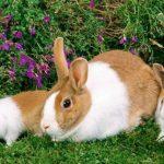 -ارانب-2019-معلومات-كاملة-عن-الأرانب-صور-ميكس-36-150x150 صور ارانب 2019 معلومات كاملة عن الأرانب
