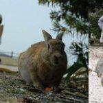 -ارانب-2019-معلومات-كاملة-عن-الأرانب-صور-ميكس-38-150x150 صور ارانب 2019 معلومات كاملة عن الأرانب