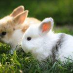 -ارانب-2019-معلومات-كاملة-عن-الأرانب-صور-ميكس-4-150x150 صور ارانب 2019 معلومات كاملة عن الأرانب