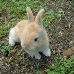-ارانب-2019-معلومات-كاملة-عن-الأرانب-صور-ميكس-40-150x150 صور ارانب 2019 معلومات كاملة عن الأرانب