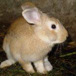 -ارانب-2019-معلومات-كاملة-عن-الأرانب-صور-ميكس-5-150x150 صور ارانب 2019 معلومات كاملة عن الأرانب