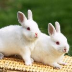 -ارانب-2019-معلومات-كاملة-عن-الأرانب-صور-ميكس-6-150x150 صور ارانب 2019 معلومات كاملة عن الأرانب