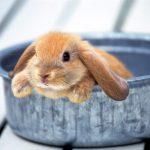 -ارانب-2019-معلومات-كاملة-عن-الأرانب-صور-ميكس-7-150x150 صور ارانب 2019 معلومات كاملة عن الأرانب