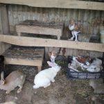 -ارانب-2019-معلومات-كاملة-عن-الأرانب-صور-ميكس-8-150x150 صور ارانب 2019 معلومات كاملة عن الأرانب