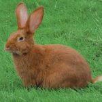 -ارانب-2019-معلومات-كاملة-عن-الأرانب-صور-ميكس-9-150x150 صور ارانب 2019 معلومات كاملة عن الأرانب