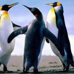 -بطريق-وحياة-وأنواع-البطاريق-كاملة-صور-ميكس-1-150x150 صور بطريق وحياة وأنواع البطاريق كاملة