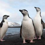-بطريق-وحياة-وأنواع-البطاريق-كاملة-صور-ميكس-20-150x150 صور بطريق وحياة وأنواع البطاريق كاملة