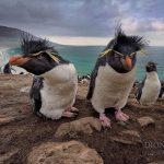 -بطريق-وحياة-وأنواع-البطاريق-كاملة-صور-ميكس-37-150x150 صور بطريق وحياة وأنواع البطاريق كاملة