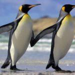 -بطريق-وحياة-وأنواع-البطاريق-كاملة-صور-ميكس-39-150x150 صور بطريق وحياة وأنواع البطاريق كاملة
