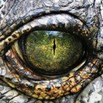 تمساح ومعلومات عن حياة وأنواع التماسيح صور ميكس 15