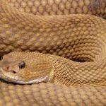 ثعبان 2019 تعرف على الثعابين وحياتها صور ميكس 1