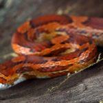 ثعبان 2019 تعرف على الثعابين وحياتها صور ميكس 18
