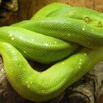 ثعبان 2019 تعرف على الثعابين وحياتها صور ميكس 2