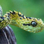 ثعبان 2019 تعرف على الثعابين وحياتها صور ميكس 21