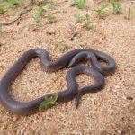 ثعبان 2019 تعرف على الثعابين وحياتها صور ميكس 22