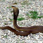 ثعبان 2019 تعرف على الثعابين وحياتها صور ميكس 31