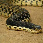 ثعبان 2019 تعرف على الثعابين وحياتها صور ميكس 5