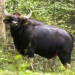 -ثور-2019-ومعلومات-عن-حياة-الثور-صور-ميكس-31-150x150 صور ثور 2019 ومعلومات عن حياة الثور
