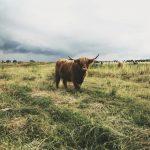 -ثور-2019-ومعلومات-عن-حياة-الثور-صور-ميكس-32-150x150 صور ثور 2019 ومعلومات عن حياة الثور