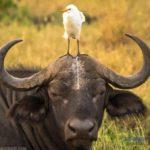 -ثور-2019-ومعلومات-عن-حياة-الثور-صور-ميكس-39-150x150 صور ثور 2019 ومعلومات عن حياة الثور