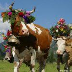 -ثور-2019-ومعلومات-عن-حياة-الثور-صور-ميكس-41-150x150 صور ثور 2019 ومعلومات عن حياة الثور