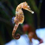 -حصان-البحر-حياة-حصان-البحر-وأنواعة-صور-ميكس-2-150x150 صور حصان البحر حياة حصان البحر وأنواعة