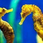 -حصان-البحر-حياة-حصان-البحر-وأنواعة-صور-ميكس-23-150x150 صور حصان البحر حياة حصان البحر وأنواعة