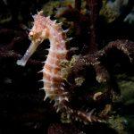 -حصان-البحر-حياة-حصان-البحر-وأنواعة-صور-ميكس-27-150x150 صور حصان البحر حياة حصان البحر وأنواعة