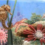 -حصان-البحر-حياة-حصان-البحر-وأنواعة-صور-ميكس-36-150x150 صور حصان البحر حياة حصان البحر وأنواعة