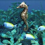 -حصان-البحر-حياة-حصان-البحر-وأنواعة-صور-ميكس-39-150x150 صور حصان البحر حياة حصان البحر وأنواعة