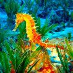 -حصان-البحر-حياة-حصان-البحر-وأنواعة-صور-ميكس-42-150x150 صور حصان البحر حياة حصان البحر وأنواعة