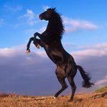حصان 2019 أنواع الحصان ومعلومات كاملة صور ميكس 13