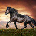 حصان 2019 أنواع الحصان ومعلومات كاملة صور ميكس 14