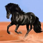 حصان 2019 أنواع الحصان ومعلومات كاملة صور ميكس 19