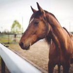 حصان 2019 أنواع الحصان ومعلومات كاملة صور ميكس 20