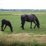 حصان 2019 أنواع الحصان ومعلومات كاملة صور ميكس 21