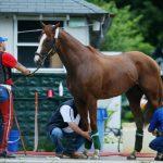 حصان 2019 أنواع الحصان ومعلومات كاملة صور ميكس 28